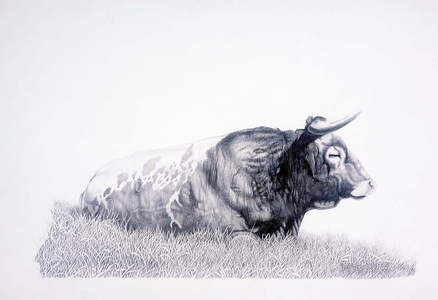 Longhorn Drawing - The Herdmaster by Howard Dubois