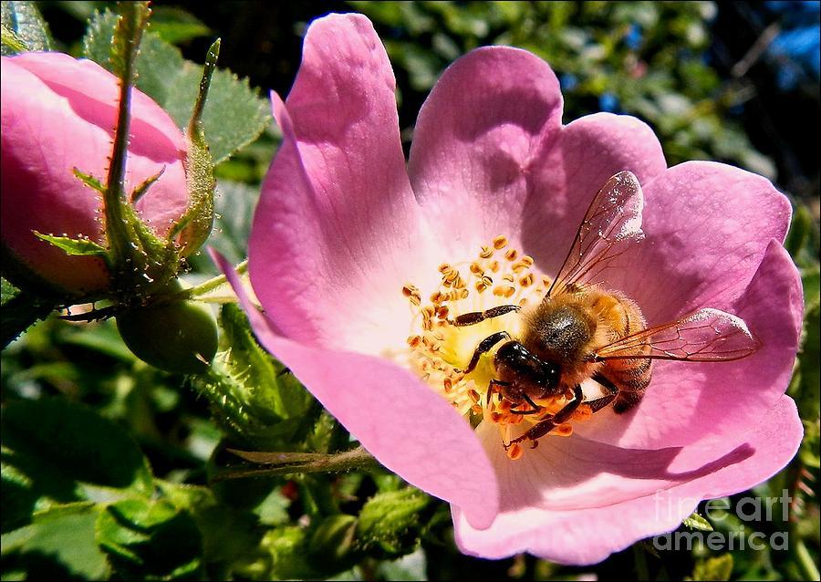 The Honey Pot by Julia Hassett