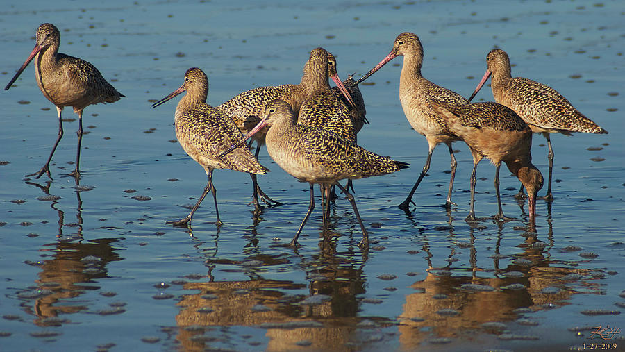 Godwits Photograph - The Horde by Kenneth Hadlock