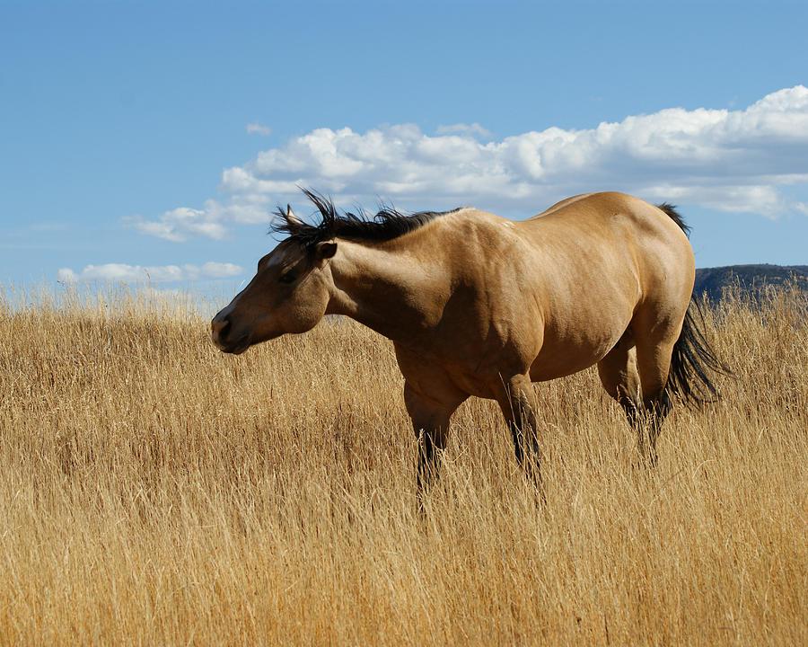 Horse Photograph - The Horse by Ernie Echols