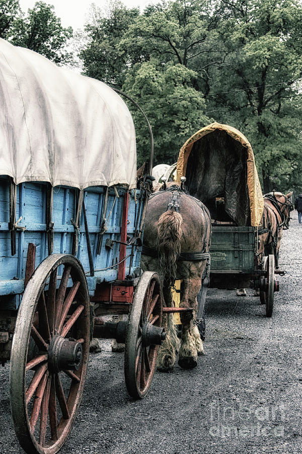 Wagon Photograph - The Horse Train  by Steven Digman