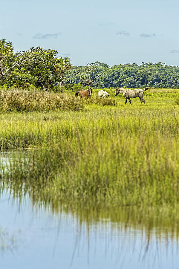 The Face Of God Photograph - The Horses Of Cumberland Island by Paula Porterfield-Izzo