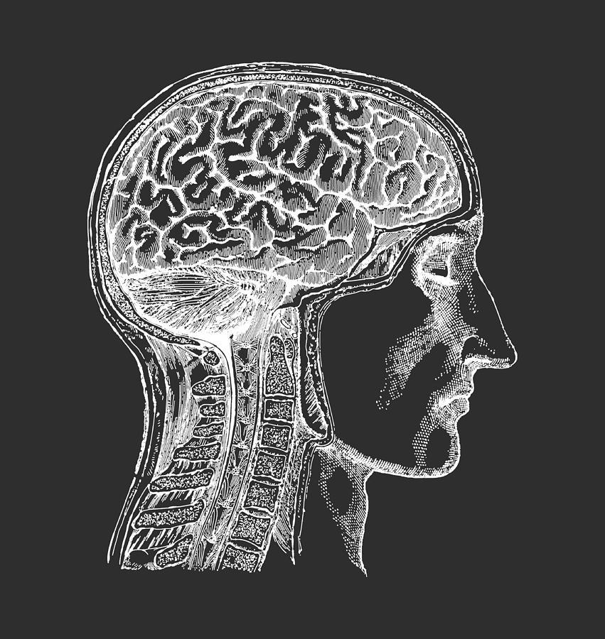 Brain Digital Art - The Human Brain - White on Black by Village Antiques