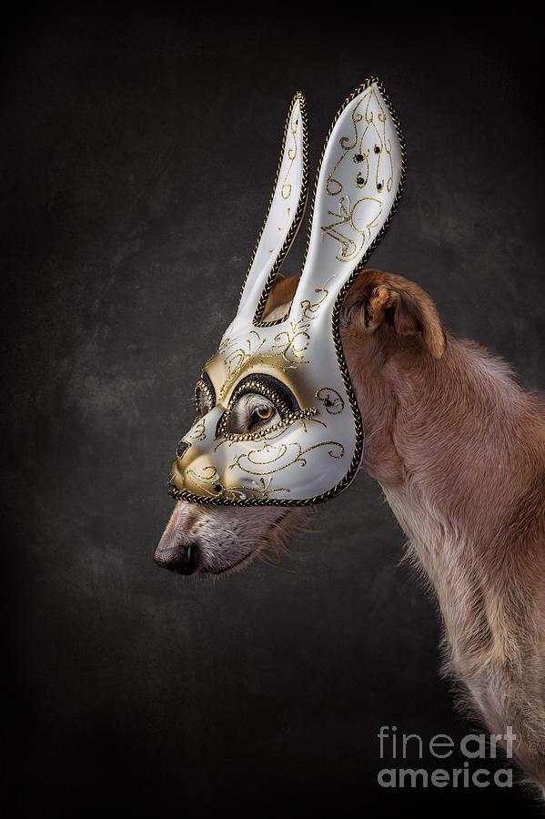 Dog wearing Rabbit Mask by Travis Patenaude