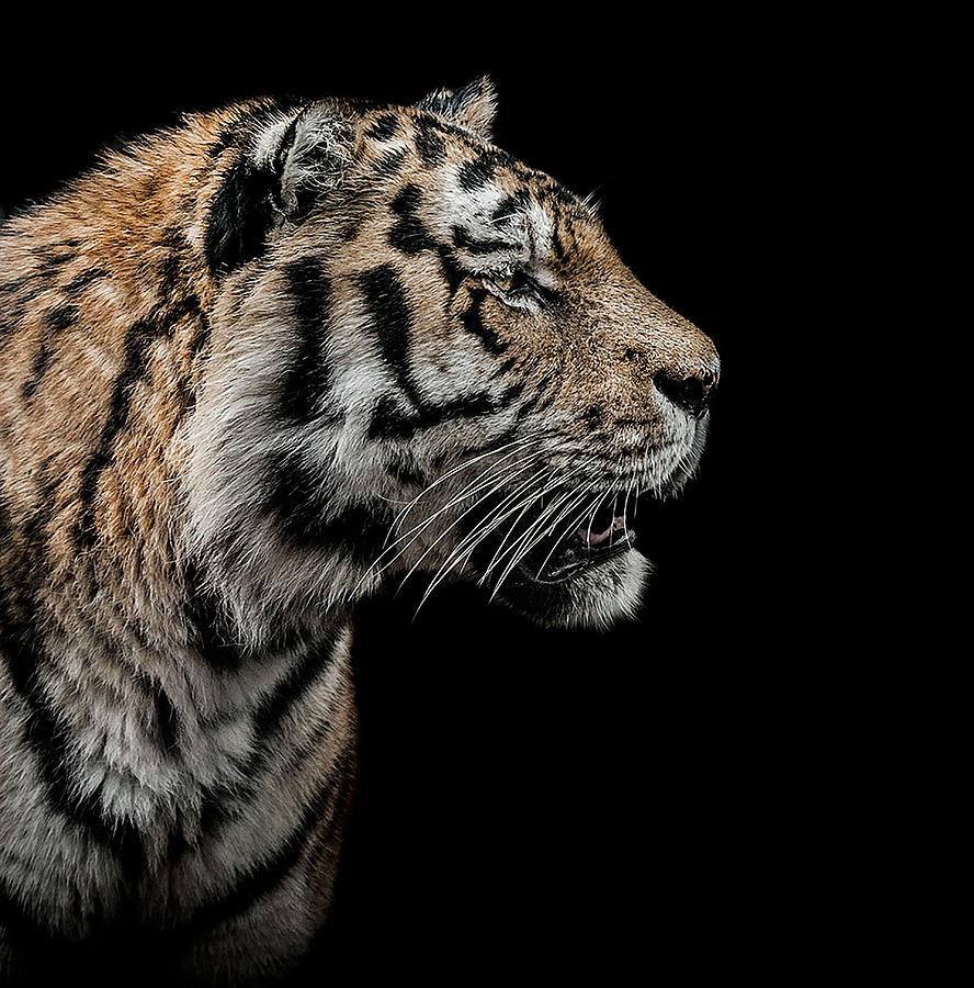 Low Key Photograph - The Hunter by Paul Neville