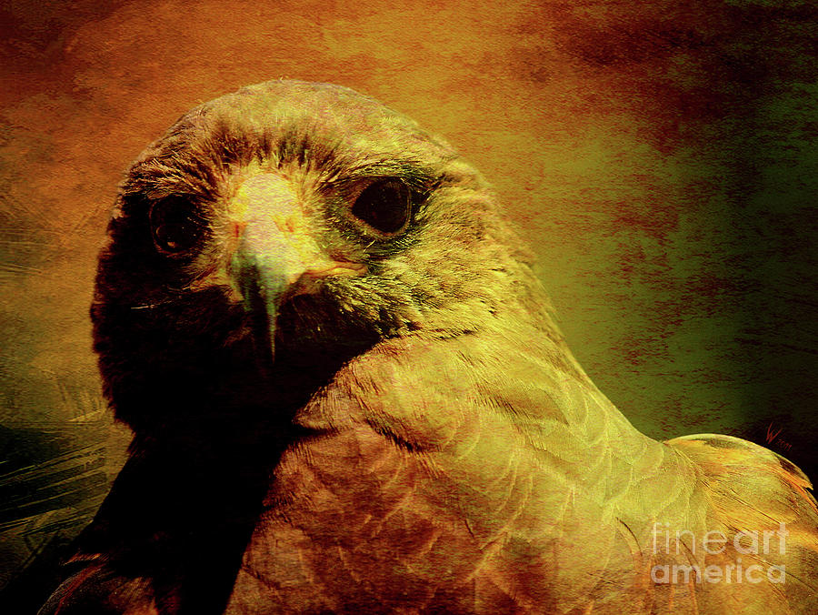 Red Tail Hawk Photograph - The Hunter . Portrait Of A Hawk . Texture . 40d7877 by Wingsdomain Art and Photography