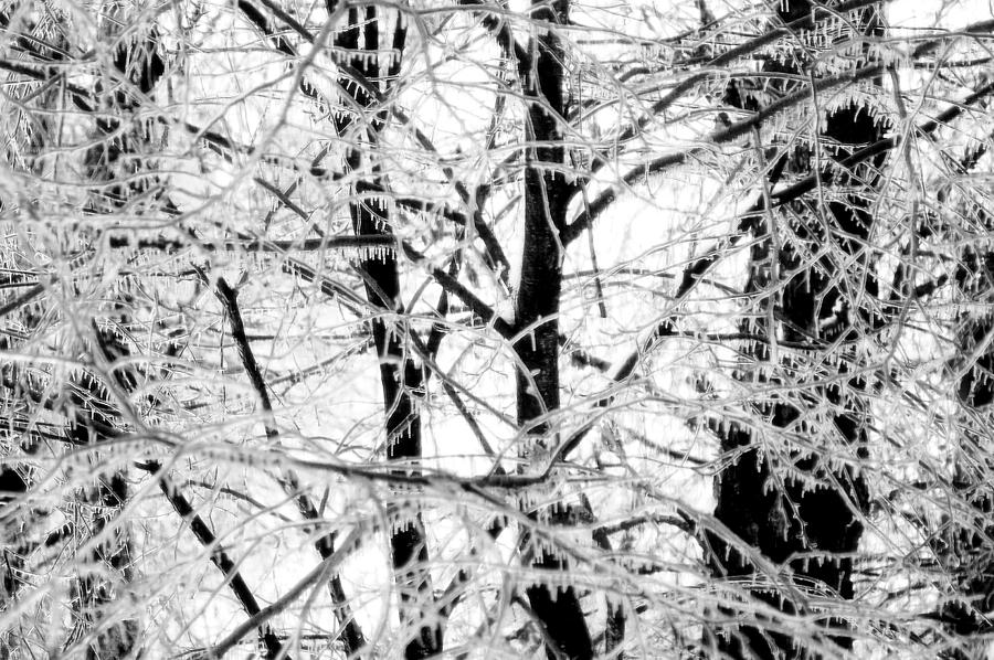 Enchanted Forest Photograph - The Ice Queens Garden by Susan Maxwell Schmidt