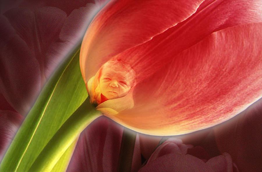 Flower Photograph - The Imp by Tony Ramos