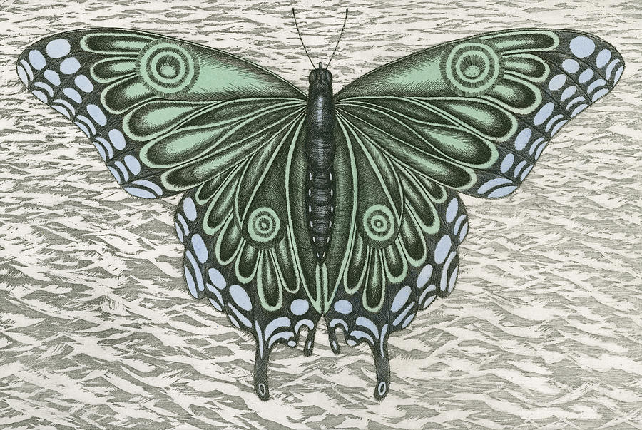 Butterfly Drawing - The Intro-spector by Charles Harden