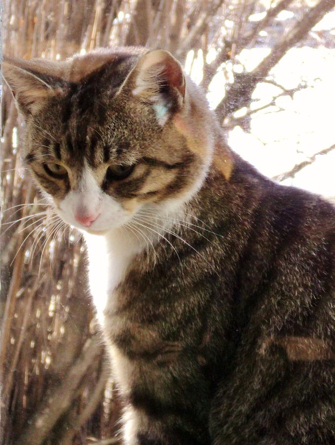 Domestic Cats Photograph - The Intruder by Janice Robertson