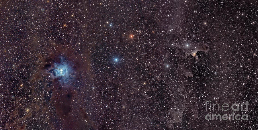 Astronomy Photograph - The Iris Nebula In Cepheus by John Davis