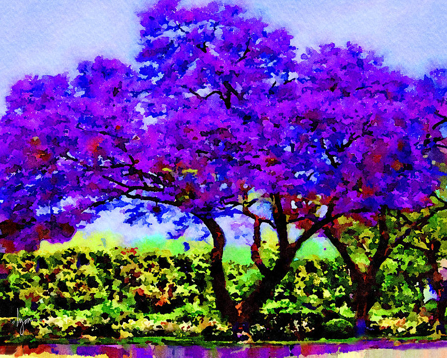 The Jacaranda by Angela Treat Lyon