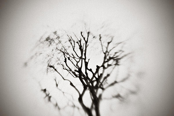 Asia Photograph - The Japanese Tree by Luca Lacche