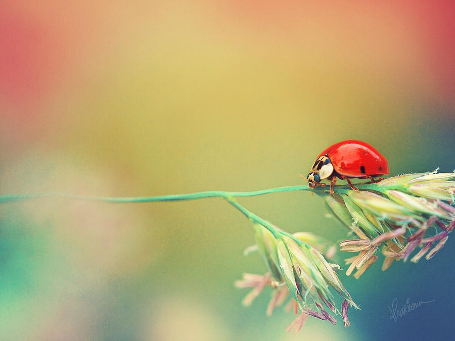 Ladybug Photograph - The Journey Ahead by Kharisma Sommers