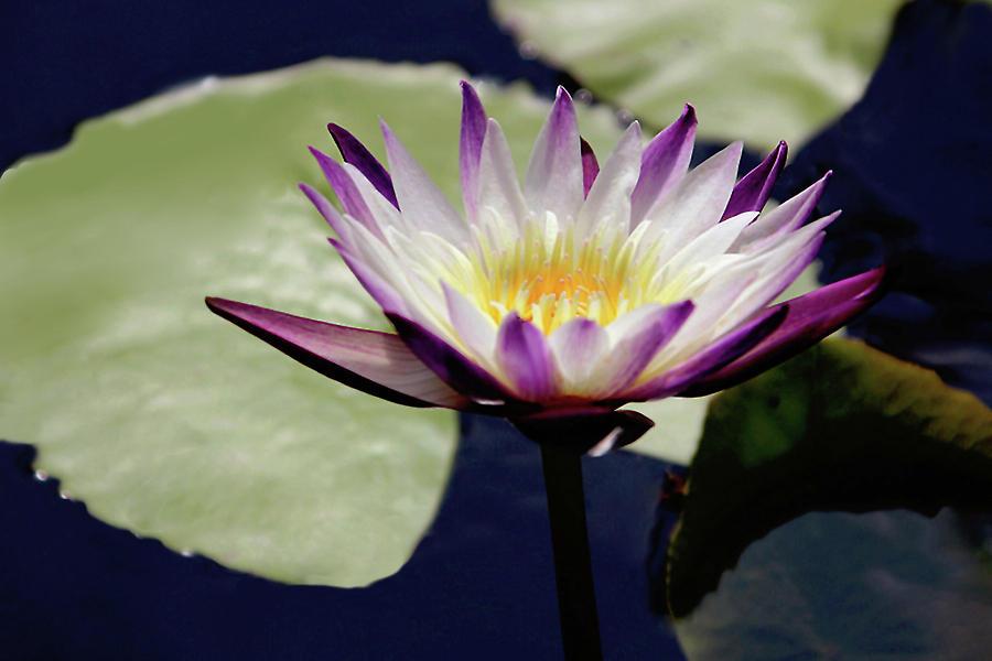 Floral Photograph - The Joy Of Purple by Debra Orlean
