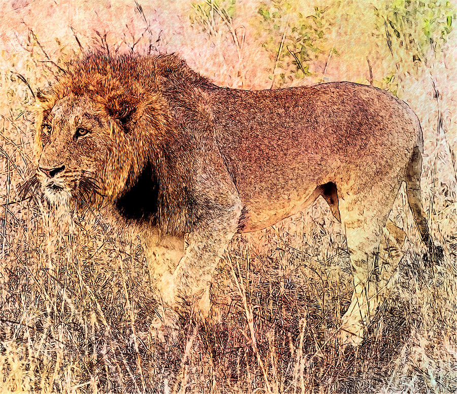 Lion Photograph - The King by Ericamaxine Price