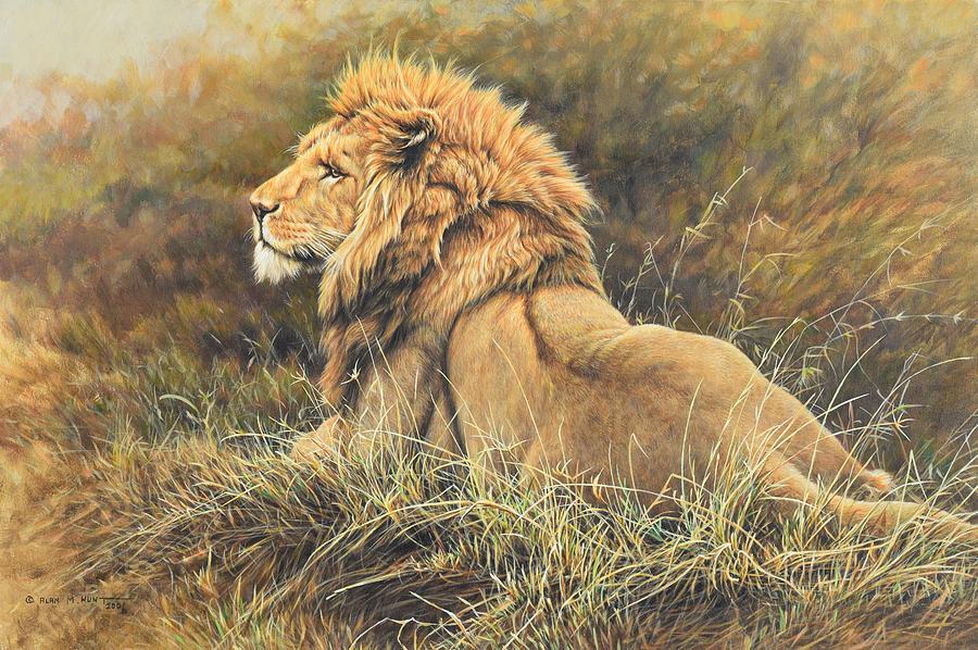 The King Lion Study Photograph