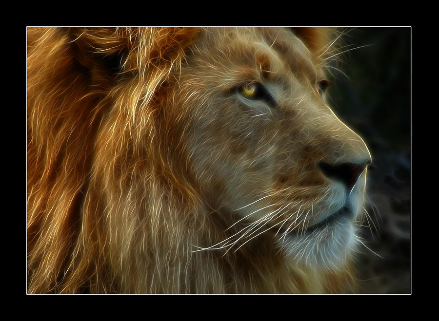 Lion Photograph - The King by Ricky Barnard
