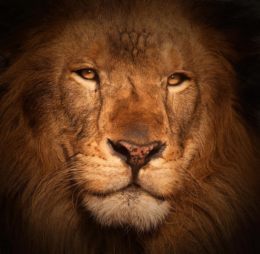 The King by Stephen Dennstedt