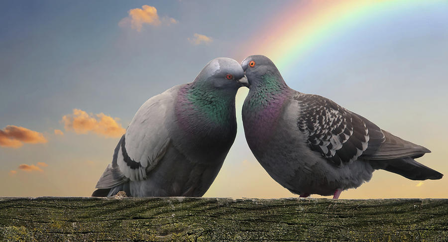 Birds Photograph - The Kiss by Rick Lawler