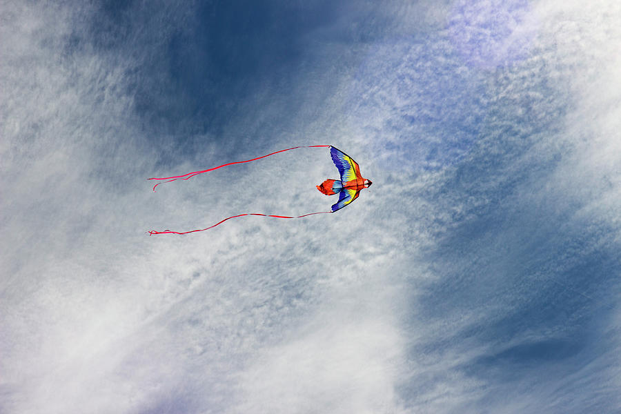 The Kite  by Cathy Anderson