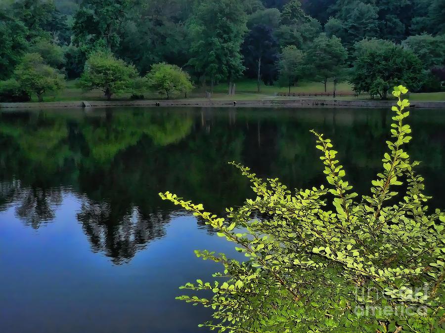 Lake Photograph - The Lake by Jeff Breiman