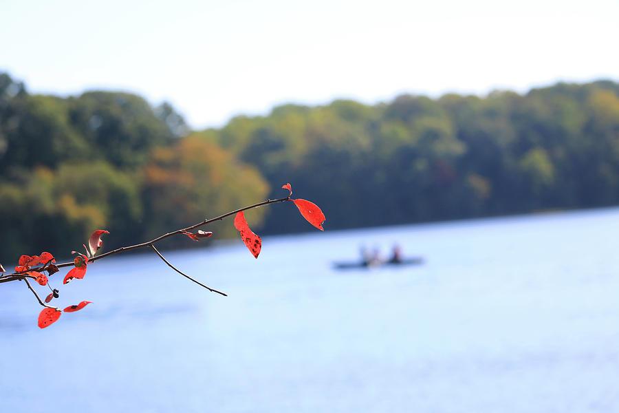 The Lake Photograph by Tony Umana