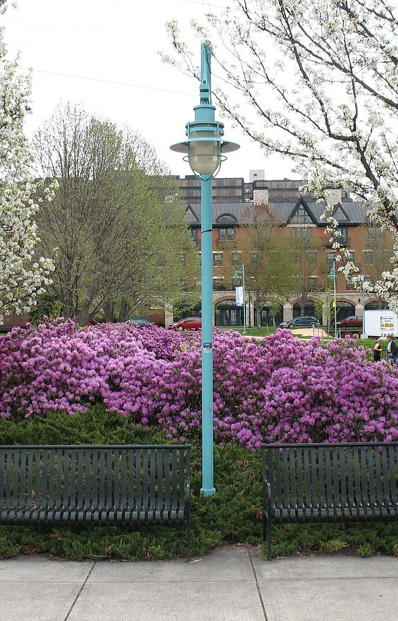 The Lamp Post by Alan Chandler