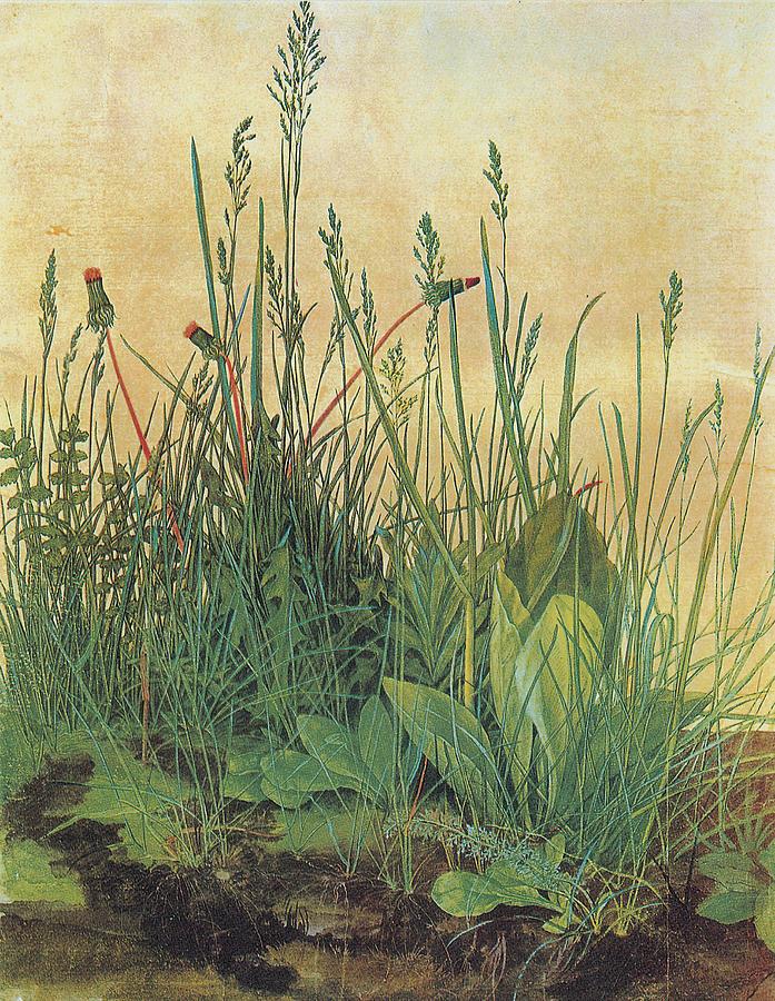 Albrecht Durer Painting - The Large Piece Of Turf by Albrecht Durer