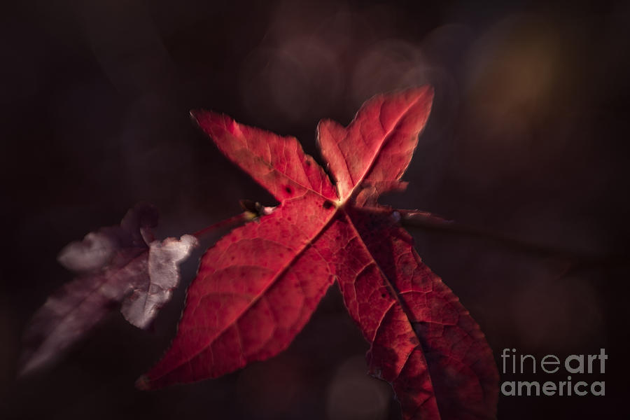 Nature Photograph - The Last by Lisa McStamp