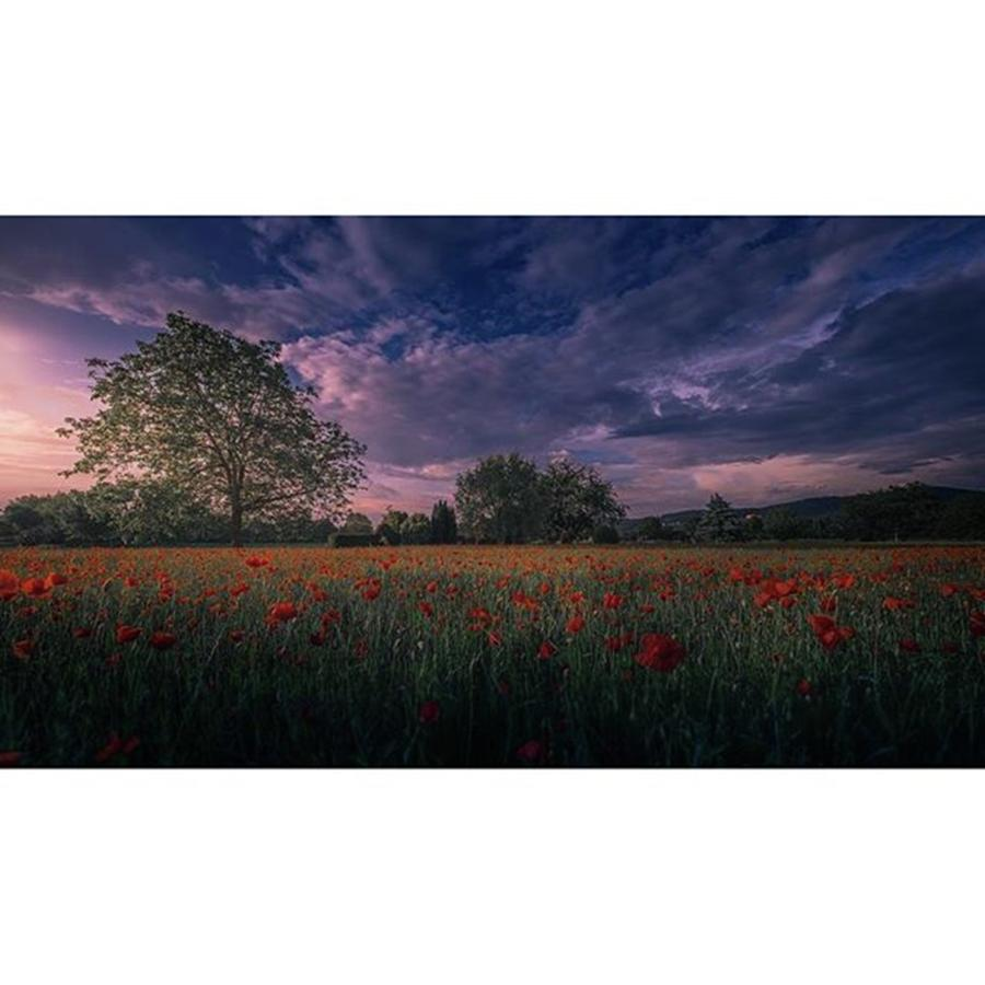 Beautiful Photograph - The Last Photo Of My Poppy by Jeffrey Groneberg