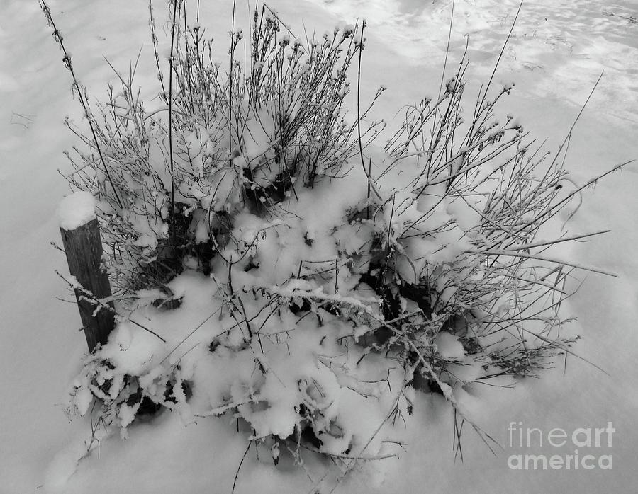Last Photograph - The Last Post by Martin Howard