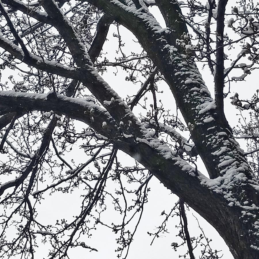 Tree Photograph - The Last Snow Fall by Ed Lumbert