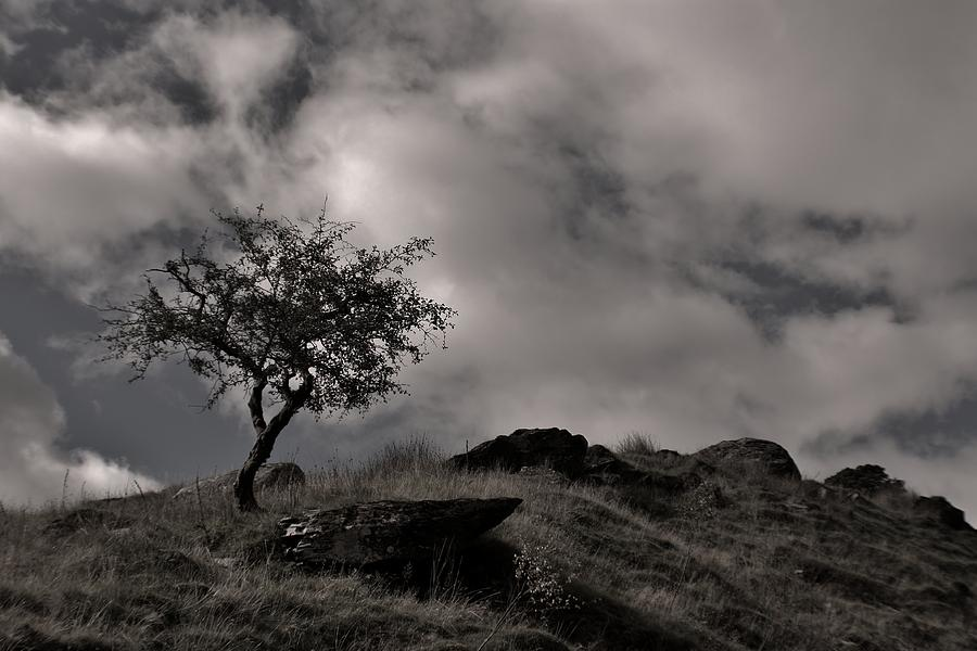 Snowdonia Photograph - The Last Tree by Sean Wareing