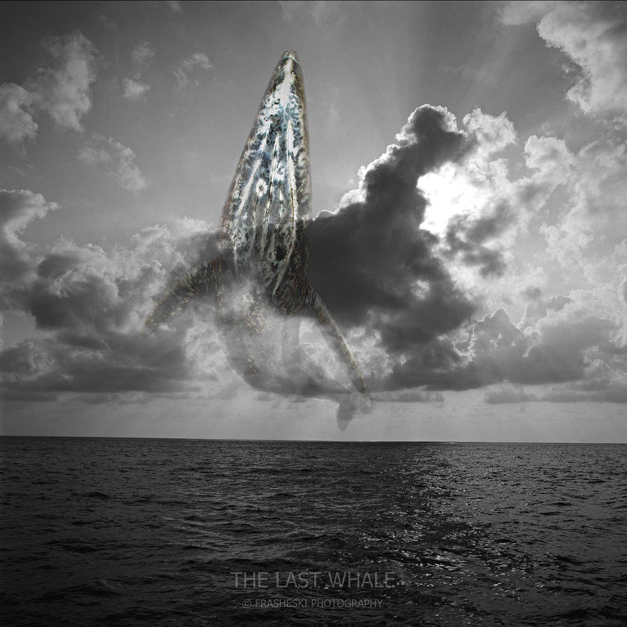 Surreal Photograph - The Last Whale by Andy Frasheski