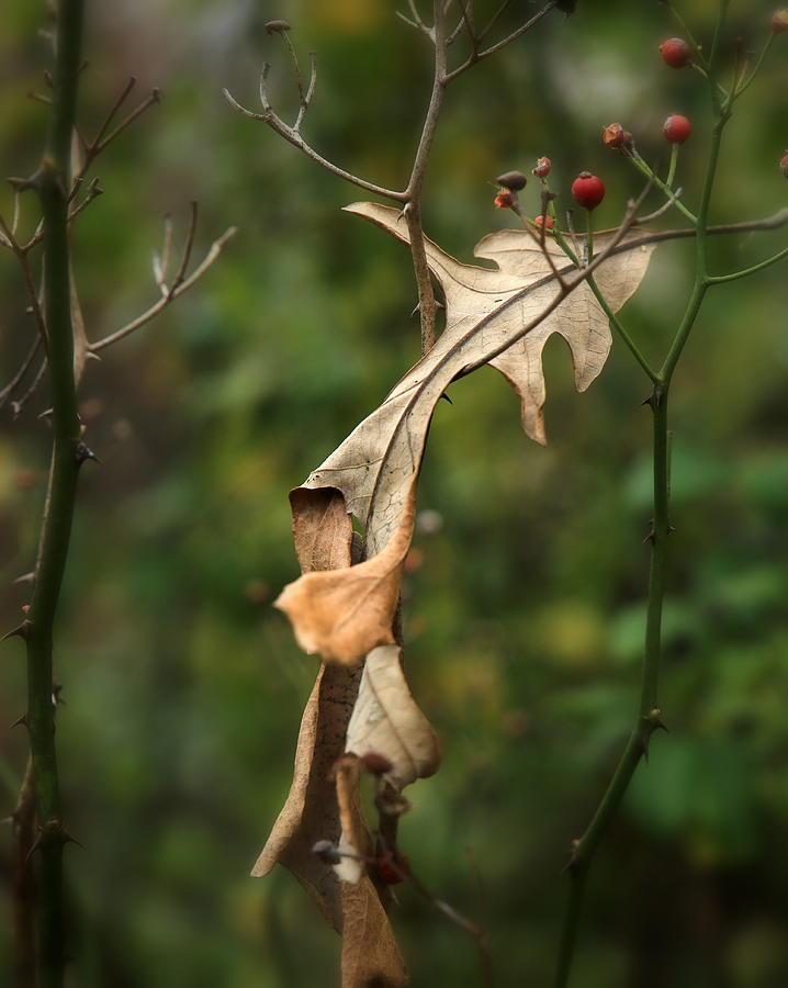 Fall Photograph - The Leaf by Mark Salamon