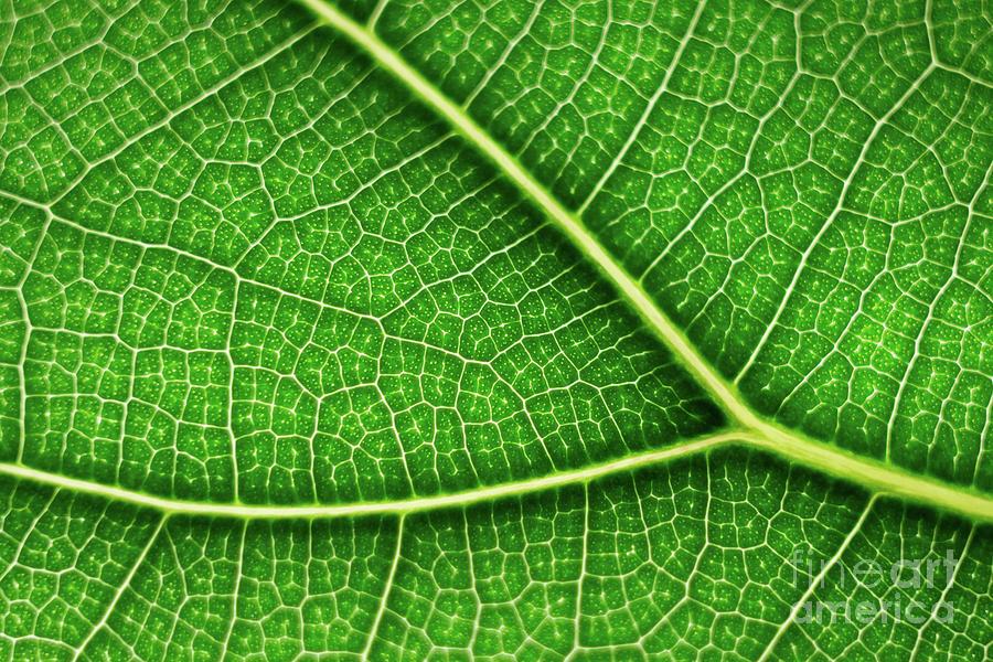 Leaf Photograph - The leaf by Paolo Sirtori