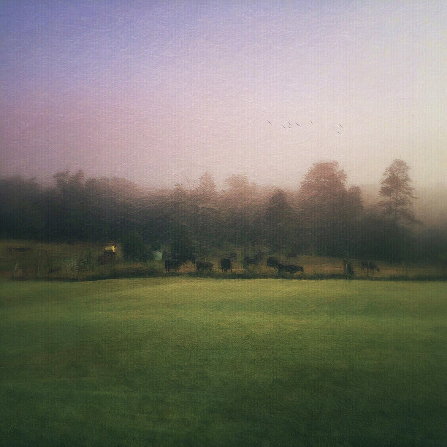 the lifting of morning fog by Melissa D Johnston