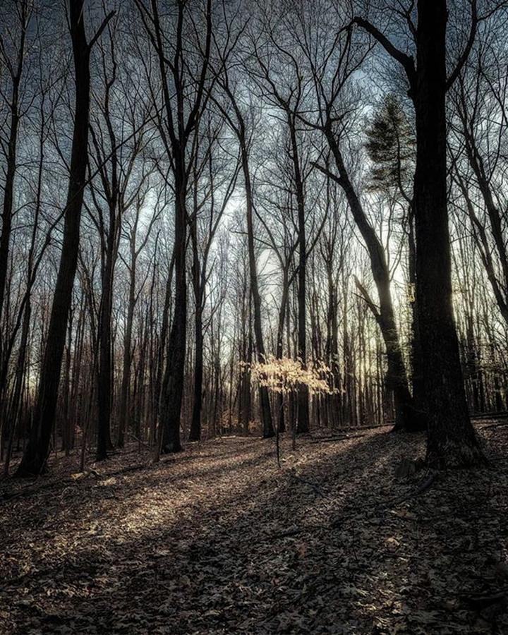 The Light I See. crescent Lake Photograph by Craig Szymanski
