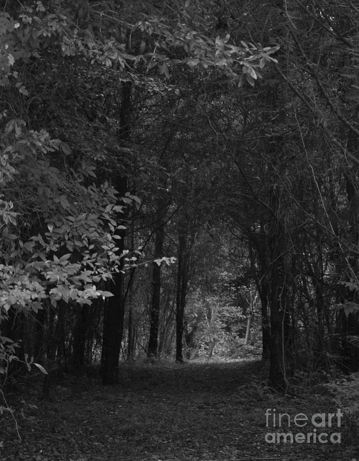 The Light Photograph