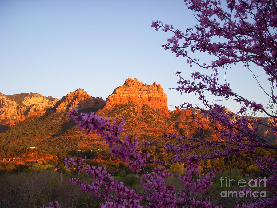 Sedona Photograph - The Light Within by Amy Strong