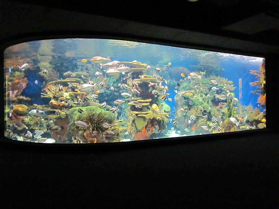 Aquarium Photograph - The Lighted Sea by David Sutter