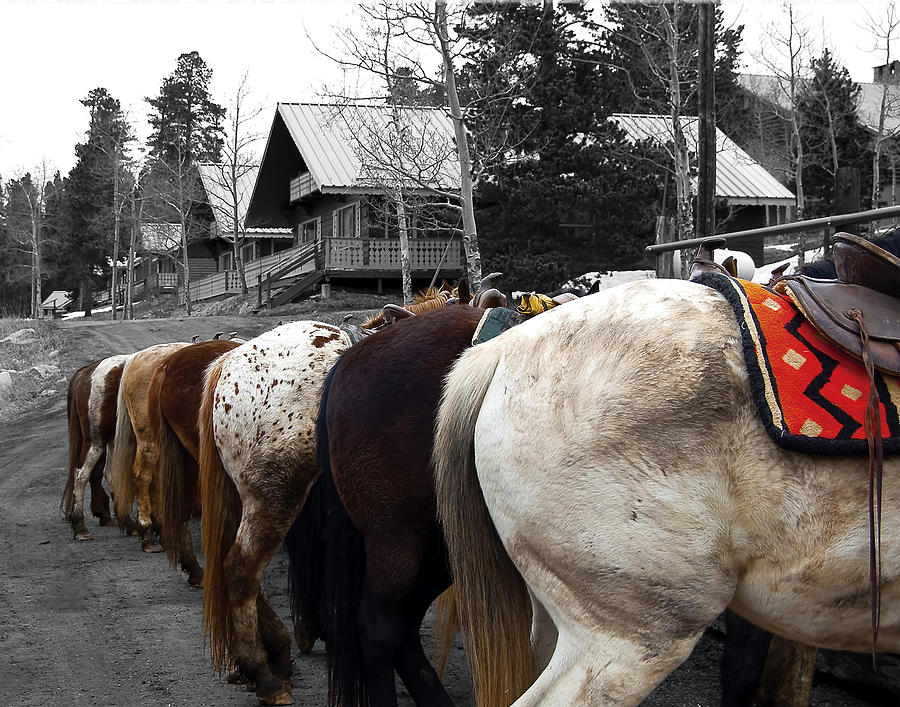 Horses Photograph - The Line Up by Barry C Donovan