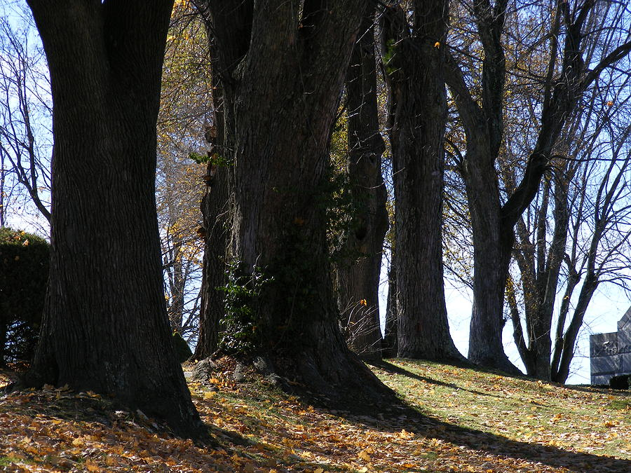 Trees Photograph - The Lineup by Nicole Kinzer