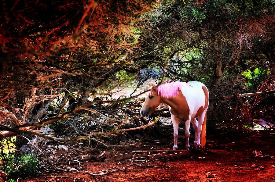 Animal Photograph - The Little Pink Unicorn By Pedro Cardona by Pedro Cardona Llambias