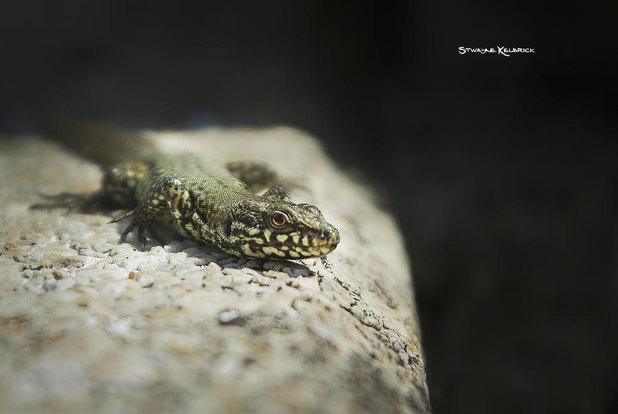 Reptile Photograph - The Lizard King on the spot by Stwayne Keubrick