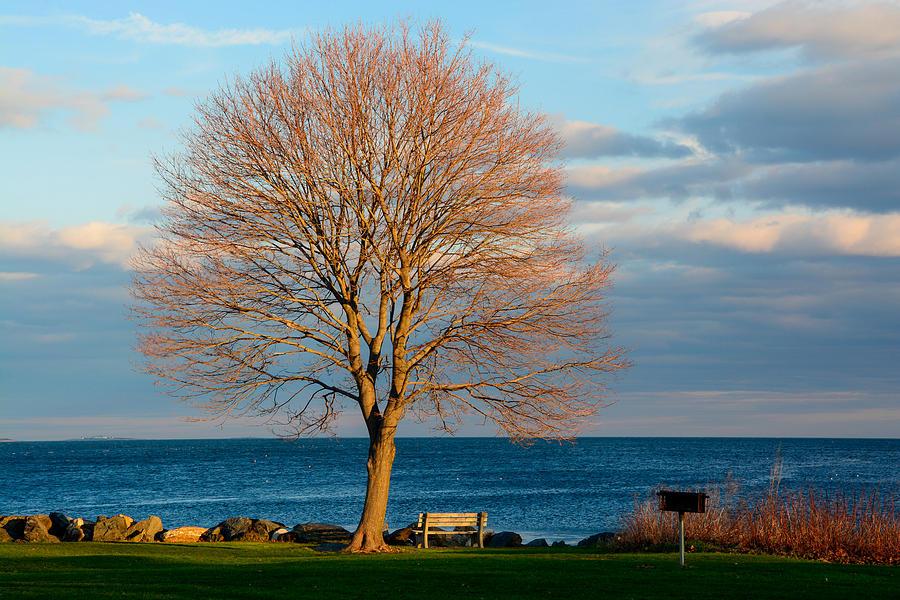 Maple Tree Photograph - The Lone Maple Tree by Nancy De Flon