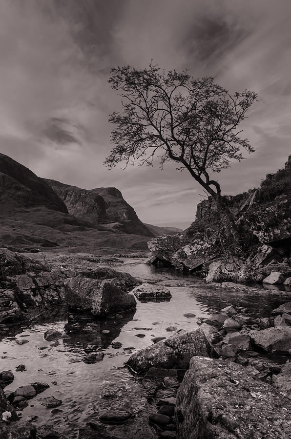 Glencoe Photograph - The Lone Tree Of Glencoe by Ben Spencer