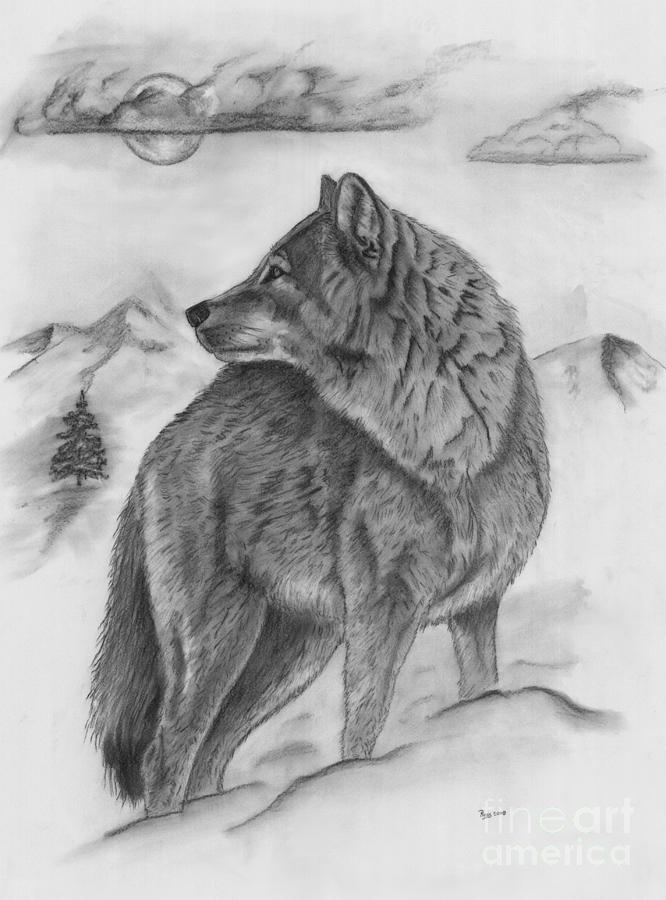 The Lone Wolf Drawing By Russ Smith