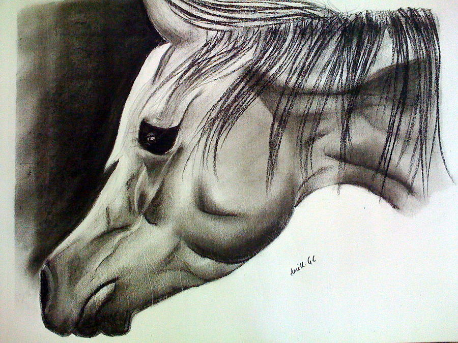 Pastels Painting - The Lonely Horse by Amith GC